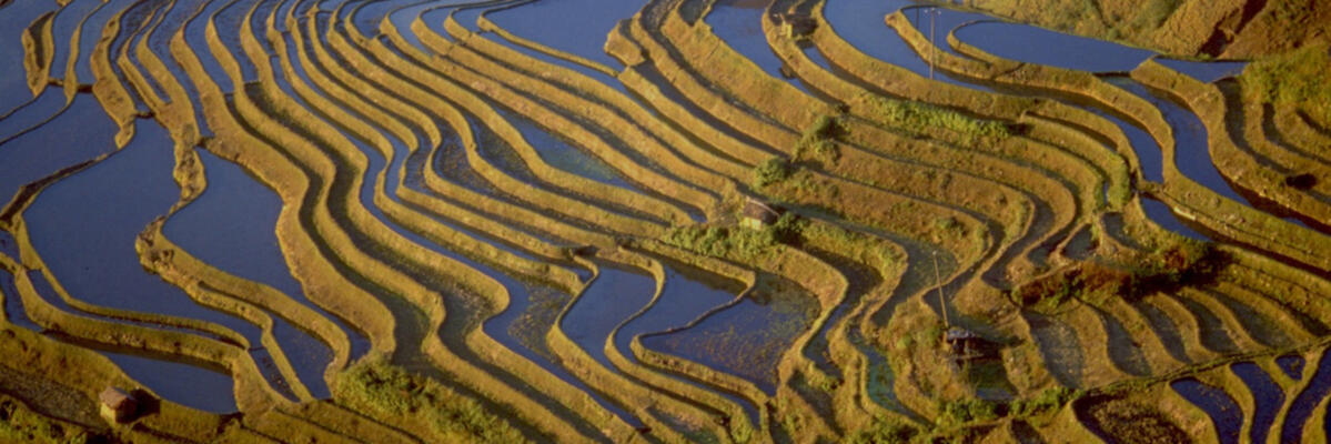 Terraces appear like waves on the ocean from some vantage points (image credit: Jim Goodman)