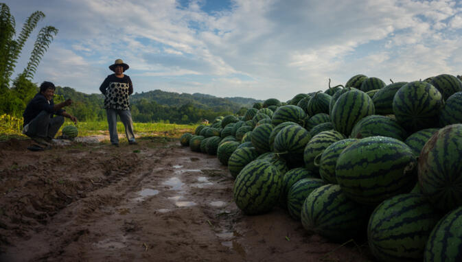Chinese watermelon growers with their bounty. Chinese migrants like these rent land to grow watermelon, often living in tiny enclaves directly adjacent to existing Lao villages (photo credit: Kyle Seewald Hemes)