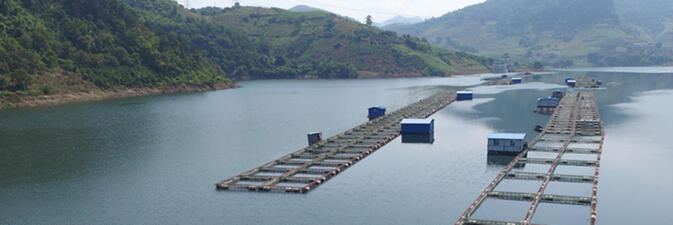 A tilapia farming operation in southern Yunnan