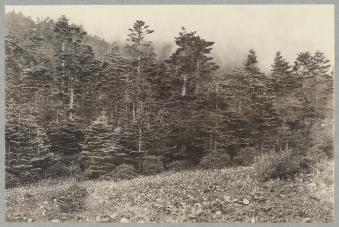 Trees at edge of meadow July 8, 1922