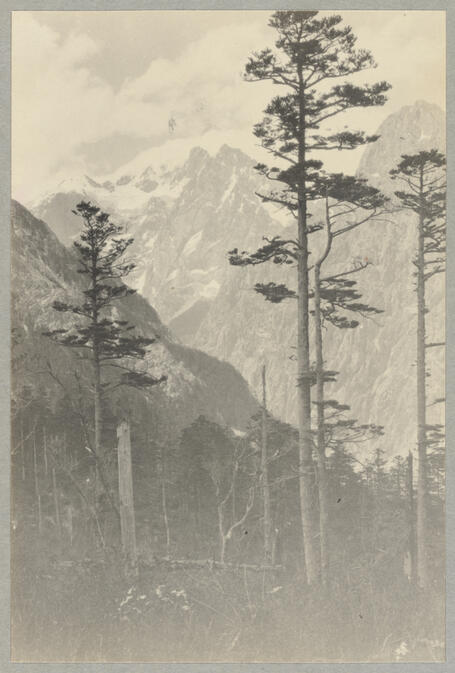 Trees with mountains beyond May 1922