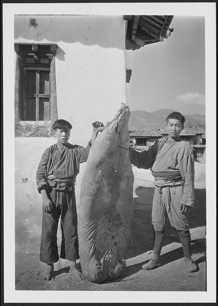 Two Moso boys holding a cured pig in Yung-ning Undated