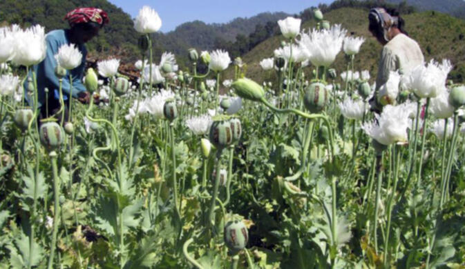 Record busts underscore Yunnan's drug enforcement challenge