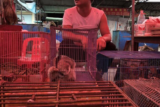 Monitor lizards, a slow loris and wild ducks for sale in Mongla, Myanmar