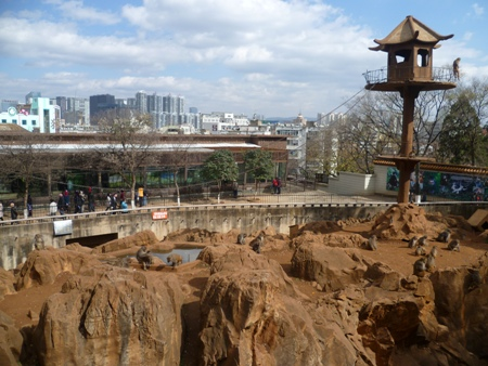 'Monkey Mountain' (猴子山) at the Kunming Zoo