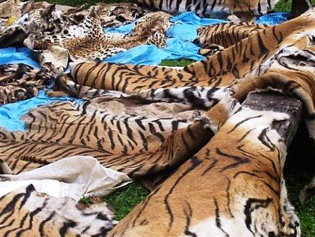trafficking in endangered animals on the rise gokunming