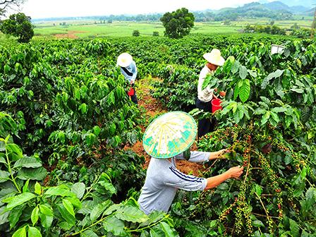 Nestlé investing 100 million yuan in Pu'er coffee - GoKunming