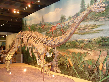 A Lufengosaurus specimen displayed at the Hong Kong Science Museum