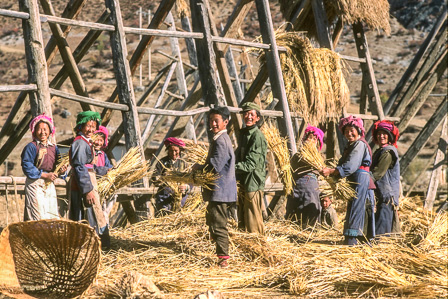 Tibetans drying wheat, northwest Yunnan