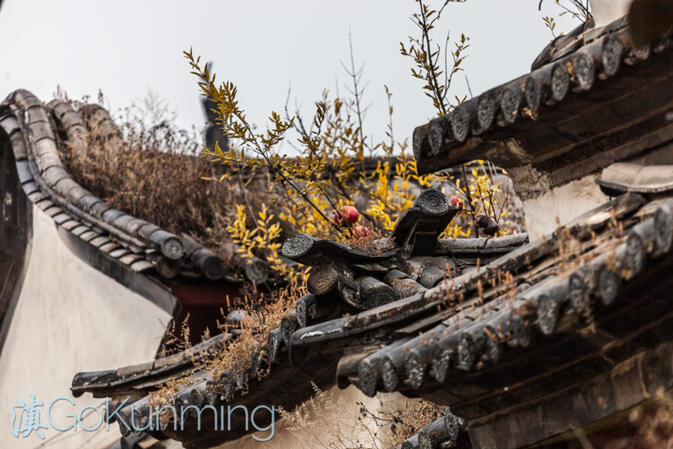Plants sprouting from the roof of an old courtyard house