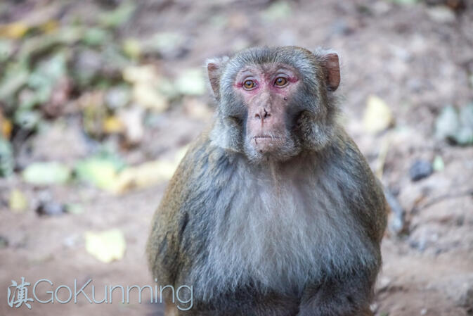 Even the monkeys appear to be contemplative at Baoxiang Temple