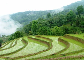 Commerce In China Rice Advice