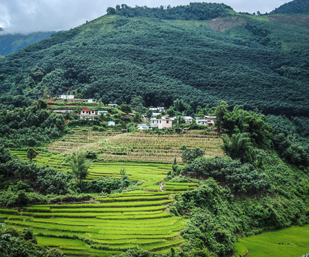 Rice paddies near Xiao Bannong (image: James Affleck)
