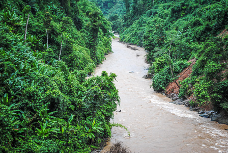 Rainforest along the Nankang River