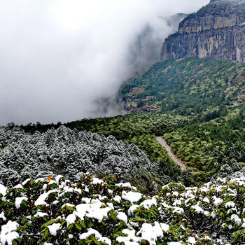 Jiaozi Snow Mountain's Azalea Forest cloaked in snow