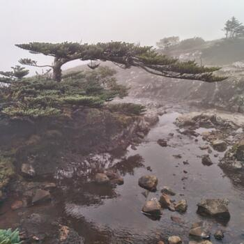 Stream, fog and a lovely little tree on the way to the summit of Jiaozi Snow Mountain (image credit: Philippe Semanaz)