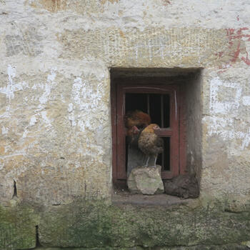 Village scene with chickens in a window (image credit: Chiara Ferraris)