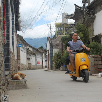 A dog in Dali Old Town watches the passing traffic