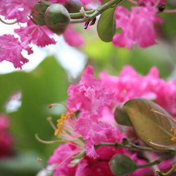 Flowers bloom in Shangjian Temple