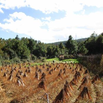 Farm near Wenping Village