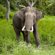 Elephant poached for ivory in Xishuangbanna